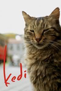 """Poster z filmu """"Kedi - sekretne życie kotów"""""""